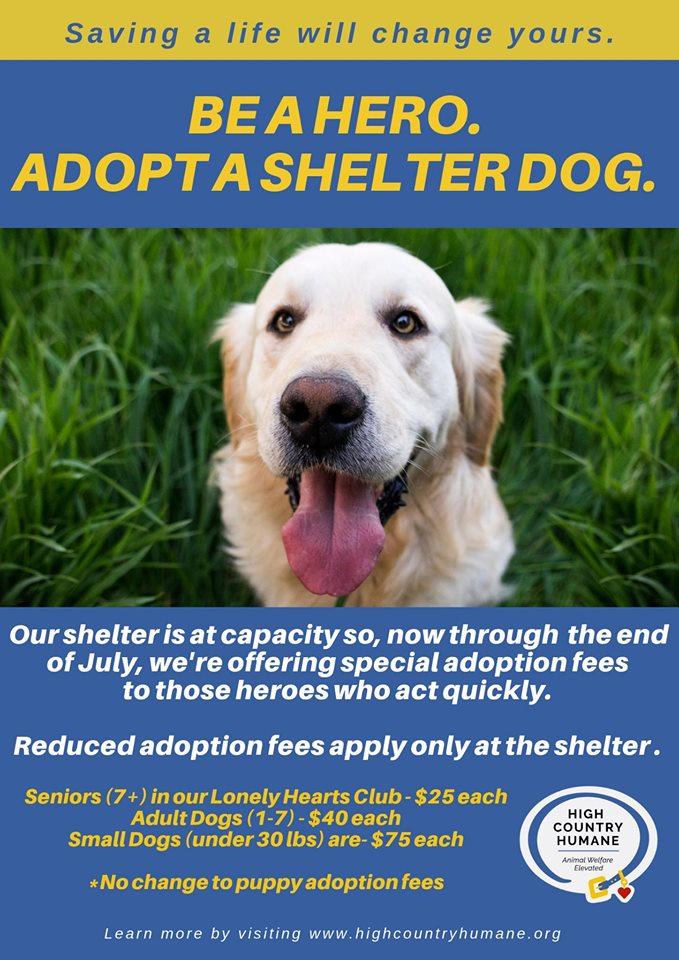 Adopt - High Country Humane Pet Adoptions in Flagstaff Arizona